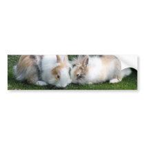 Rabbits Bumper Sticker