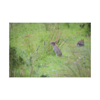 Rabbits In An English Meadow Canvas Print