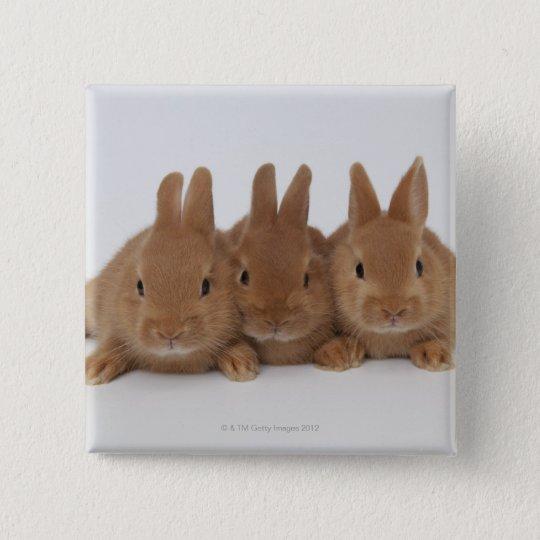 Rabbits.Netherland Dwarfs. Button