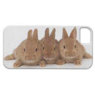 Rabbits.Netherland Dwarfs. iPhone SE/5/5s Case