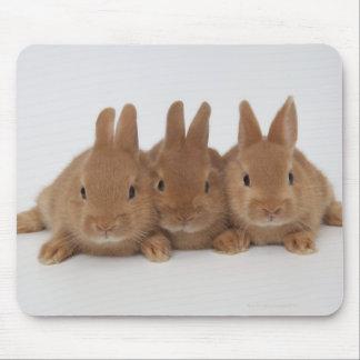 Rabbits.Netherland Dwarfs. Mouse Pad