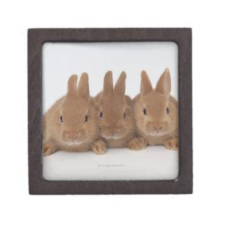 Rabbits.Netherland Dwarfs. Premium Keepsake Boxes
