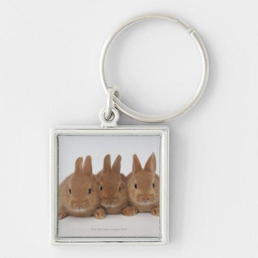 Rabbits.Netherland Dwarfs. Silver-Colored Square Keychain