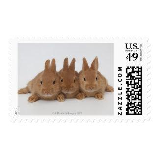 Rabbits.Netherland Dwarfs. Stamp