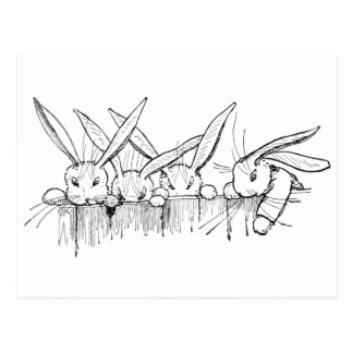 Rabbits Peering Over Fence Postcard