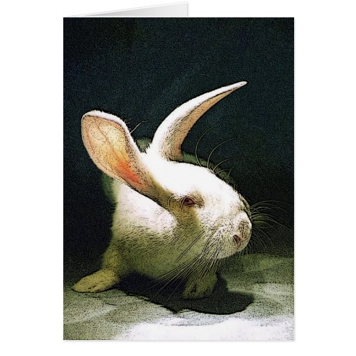 rabbitt cards