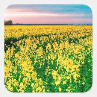 Rabina del amarillo del campo de la naturaleza pegatina cuadrada