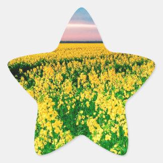 Rabina del amarillo del campo de la naturaleza pegatina en forma de estrella