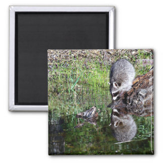 Raccon Reflection 2 Inch Square Magnet