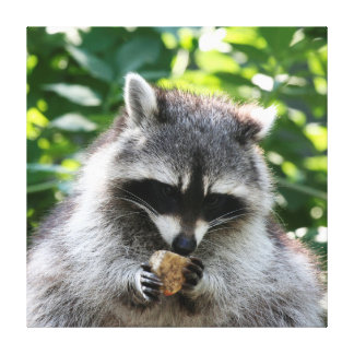 Raccoon 004 canvas print