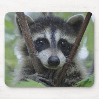 Raccoon - #1005 mouse pad