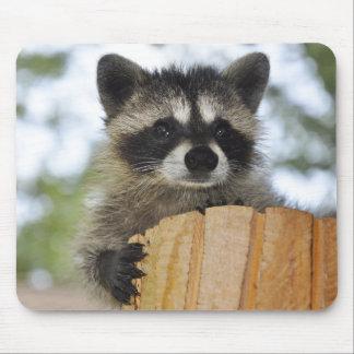 raccoon - #1007 mouse pad