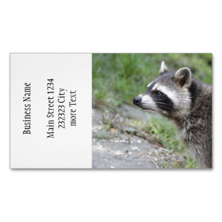 raccoon 1115 business card magnet