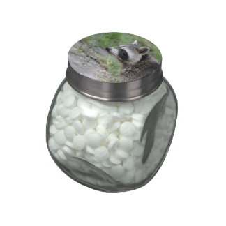 raccoon 1115 jelly belly candy jars