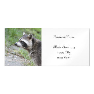 raccoon 1115 magnetic card