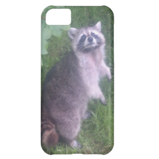 Raccoon #1 case for iPhone 5C