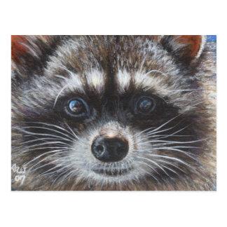 Raccoon #1 postcard