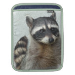 raccoon-20.jpg sleeve for iPads