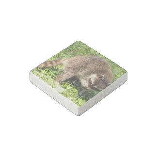 raccoon-24.jpg imán de piedra