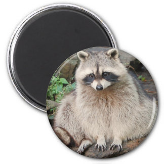 Raccoon 2 Inch Round Magnet