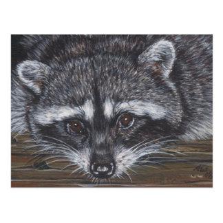 Raccoon #2 postcard