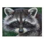 Raccoon #3 post cards