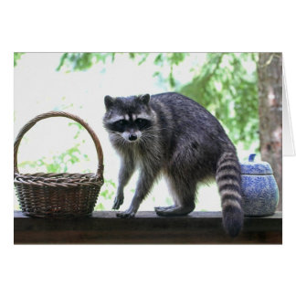 Raccoon and Cookie Jar Card