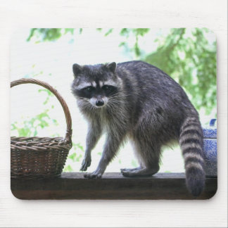 Raccoon and Cookie Jar Mouse Pad