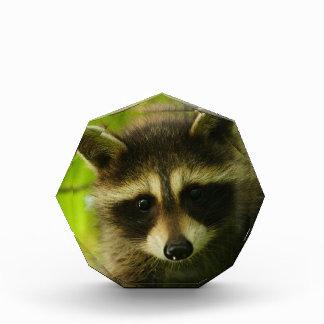 raccoon award