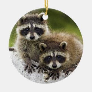 Raccoon Babies Ceramic Ornament