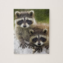Raccoon Babies Jigsaw Puzzle