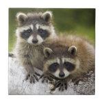 Raccoon Babies Tiles