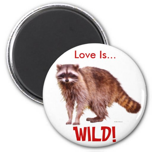 RACCOON BABY Collection Refrigerator Magnet