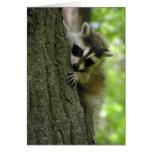 Raccoon Baby Greeting Card