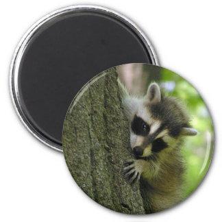 Raccoon Baby Magnet