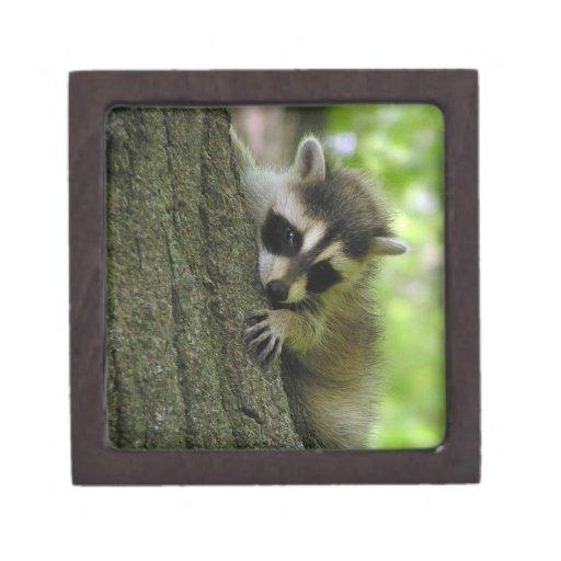 Raccoon Baby Premium Gift Box