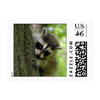Raccoon Baby Small Stamp
