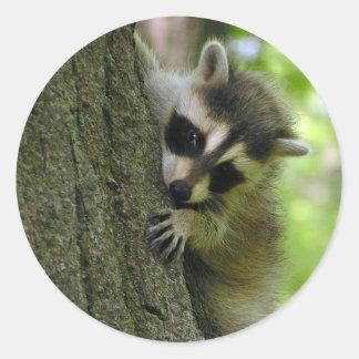 Raccoon Baby Stickers