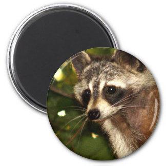 """Raccoon """"Bandit"""" Magnet"""