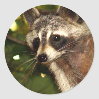 "Raccoon ""Bandit"" Sticker"