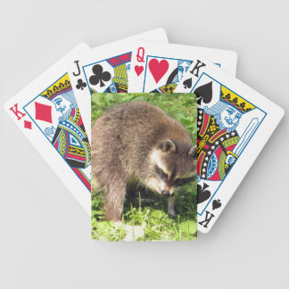 Raccoon Bathing Deck of Cards Bicycle Playing Cards