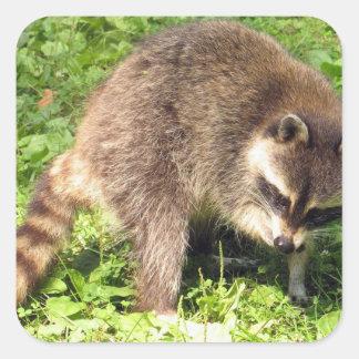 Raccoon Bathing Stickers