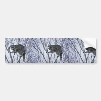 Raccoon Car Bumper Sticker