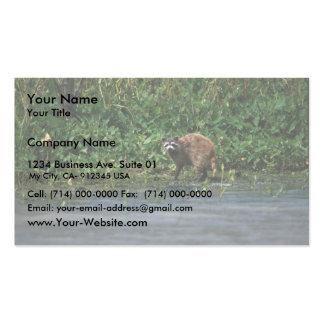 Raccoon Business Card Templates