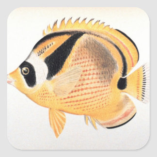 Raccoon Butterflyfish Square Sticker