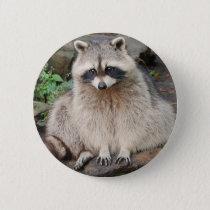 Raccoon Button