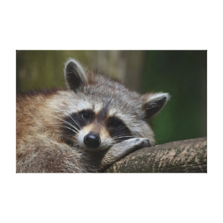 Raccoon Gallery Wrapped Canvas