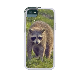 Raccoon Cover For iPhone 5