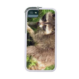 Raccoon iPhone 5/5S Cover