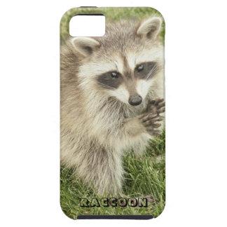 Raccoon iPhone 5 Cover
